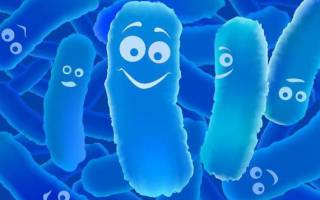 Какой выбрать пробиотик