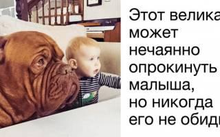 Какую породу собак выбрать для частного дома с детьми