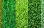 Как выбрать траву для газона