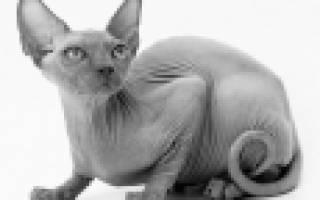 Какую породу кошек выбрать для ребенка в квартиру