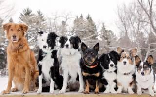 Как выбрать породу собаки для себя