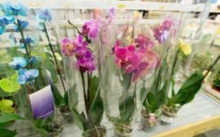 Как правильно при покупке выбрать орхидею