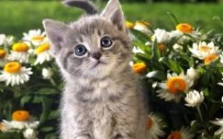 Как имя выбрать котенку